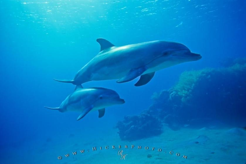 dolphin-photos_4786