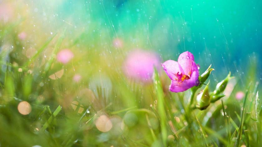 hd-wallpapers-flower-rain-wallpaper-1920x1080-wallpaper