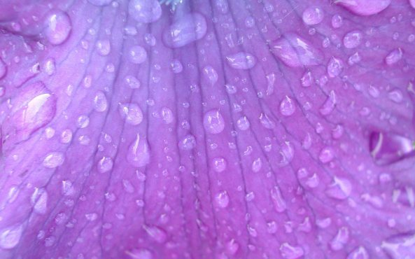 Purple Flower Water Drops