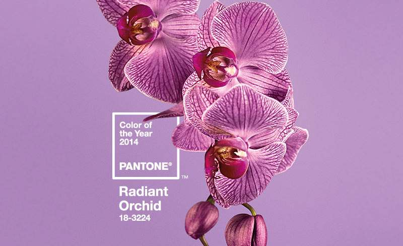 pantone-color-of-the-year-2014-radiant-orchid-on-black-bridal-bliss